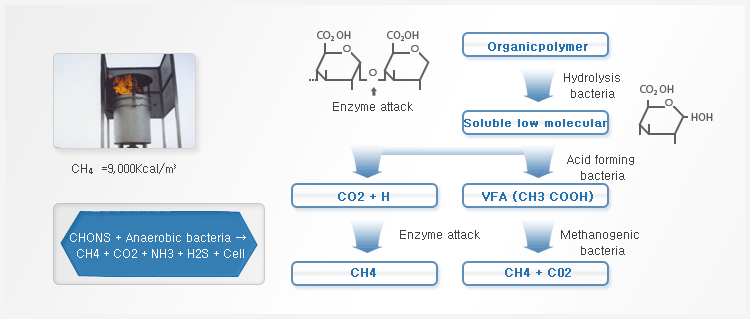 Overview Organic material is converted to CO₂ and CH₄ by the hydrolysis, acid forming and methanogenic bacteria in anaerobic condition.